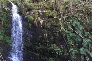 Casona labrada cascadas